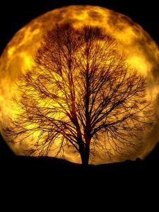 moon-165487_640